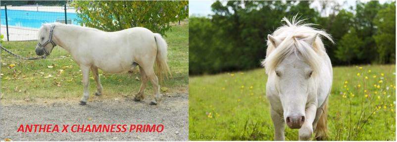 ANTHEA PRIMO